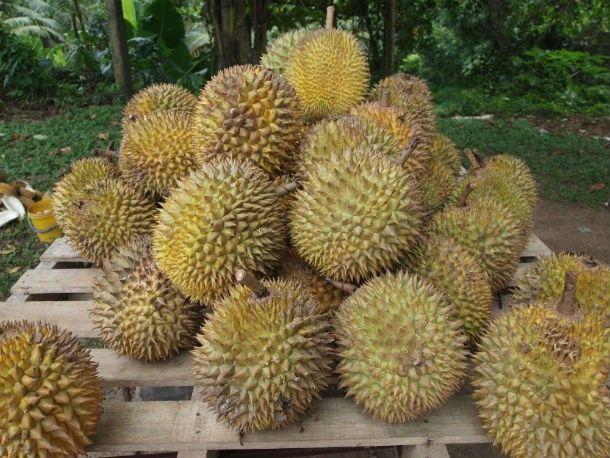 Durian-en.wikipedia.org_-610x458