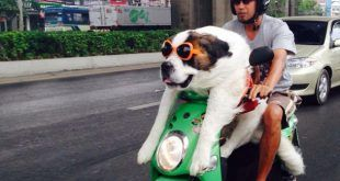 big-dog-on-a-motorbike-610x353